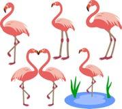 Pájaros rosados del flamenco Fotos de archivo libres de regalías