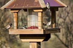 Pájaros salvajes en invierno en alimentador Imágenes de archivo libres de regalías