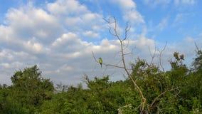 Pájaros salvajes en la reserva