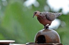 Pájaros salvajes en los alimentadores imagenes de archivo
