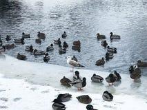 Pájaros salvajes hermosos en un paisaje urbano imagenes de archivo