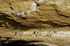 Pájaros salvajes no numerables que se encaraman en el arco o la catedral, la formación de Catedral del La de roca famosa en la re fotos de archivo