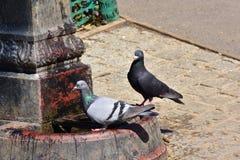 Pájaros sedientos en la fuente de agua Foto de archivo libre de regalías