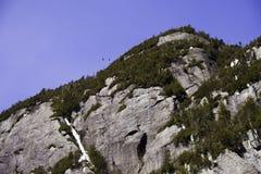 Pájaros sobre el acantilado Imagenes de archivo
