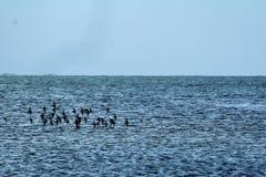 Pájaros sobre el mar Foto de archivo