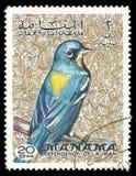 Pájaros, tordo de la roca azul imágenes de archivo libres de regalías