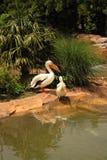 Pájaros tranquilos Fotografía de archivo libre de regalías