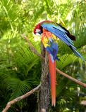 Pájaros tropicales fotografía de archivo libre de regalías