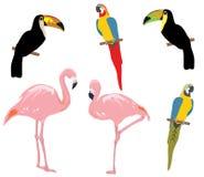 Pájaros tropicales del vector aislados en el fondo blanco