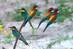 Pájaros tropicales exóticos Fotografía de archivo