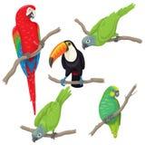 Pájaros tropicales fijados libre illustration