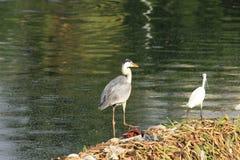 Pájaros urbanos curiosos en un parque foto de archivo
