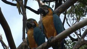 Pájaros verdes del Ara del loro en el agua de las islas de las Islas Galápagos almacen de metraje de vídeo