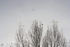 Pájaros y árboles en invierno Imagen de archivo libre de regalías