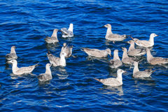Pájaros y agua azul Imágenes de archivo libres de regalías