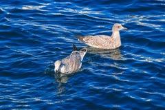 Pájaros y agua azul Imagen de archivo libre de regalías
