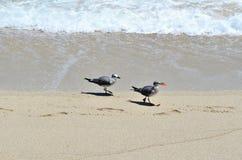 Pájaros y basura Imagen de archivo libre de regalías