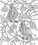 Pájaros y bayas que colorean la página Cardenales septentrionales stock de ilustración