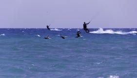 Pájaros y el mar Fotos de archivo