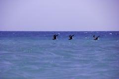 Pájaros y el mar Imagen de archivo