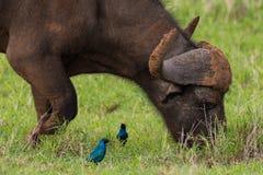 Pájaros y la bestia foto de archivo