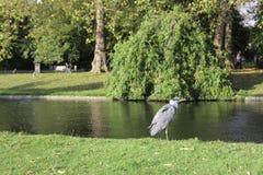 Pájaros y otros del parque de Londres Fotografía de archivo