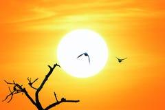 Pájaros y puesta del sol imagenes de archivo