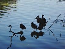 Pájaros y reflexiones Fotos de archivo