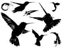 Pájaros y siluetas de las plumas Foto de archivo