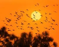 Pájaros y sol Imagen de archivo libre de regalías