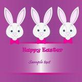 Páscoa Bunny Card Fotos de Stock Royalty Free