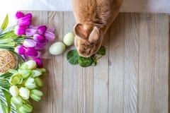 A Páscoa Bunny Rabbit na cor do rufus cercado na primavera floresce na placa de madeira, parte superior vê para baixo fotografia de stock
