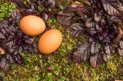 Páscoa, dois ovos naturais na terra com plantas Imagem de Stock Royalty Free