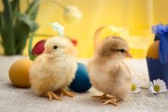 Páscoa, galinha da Páscoa, ovos da páscoa, cartão de Páscoa Fotos de Stock