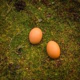 Páscoa natural, dois ovos com base na grama Imagens de Stock Royalty Free
