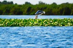 Pássaro à superfície da àgua com plantas Fotografia de Stock Royalty Free