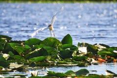 Pássaro à superfície da àgua com plantas Fotos de Stock Royalty Free