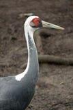 Pássaro Imagens de Stock