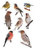 Pássaro imagem de stock