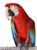 Pássaro Imagens de Stock Royalty Free