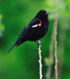 Pássaro foto de stock