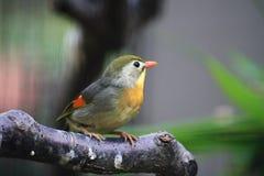 Pássaro Fotografia de Stock