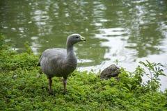 Pássaro 139 Imagem de Stock
