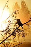 Pássaro abstrato Backround Fotos de Stock Royalty Free