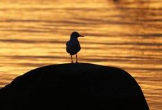Pássaro adiantado. Imagens de Stock