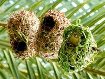 Pássaro africano do tecelão em seu ninho. Fotos de Stock Royalty Free