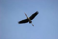 Pássaro alto da mosca imagens de stock