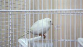 Pássaro amarelo branco vídeos de arquivo