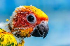 Pássaro amarelo do papagaio Imagem de Stock Royalty Free