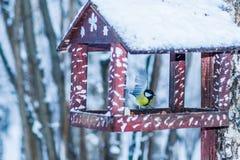 Pássaro amarelo do titmouse em um alimentador Fotografia de Stock